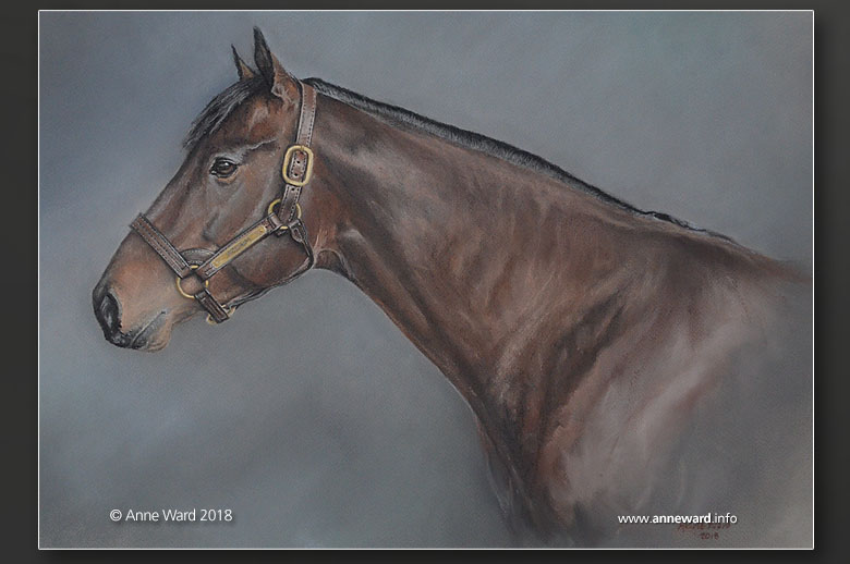 Anne Ward pastel portrait commission of Thoroughbred racehorse Aclaim