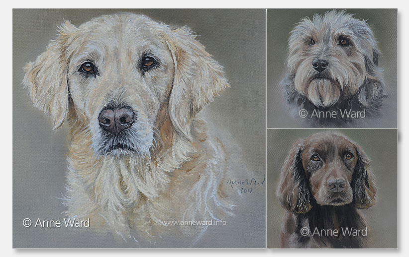 Anne Ward artist commissioned dog portraits