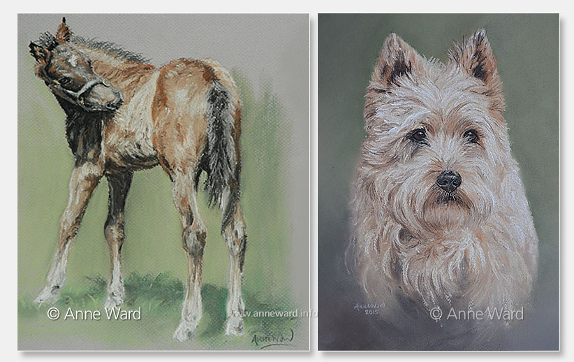 Anne Ward artist foal and terrier portraits