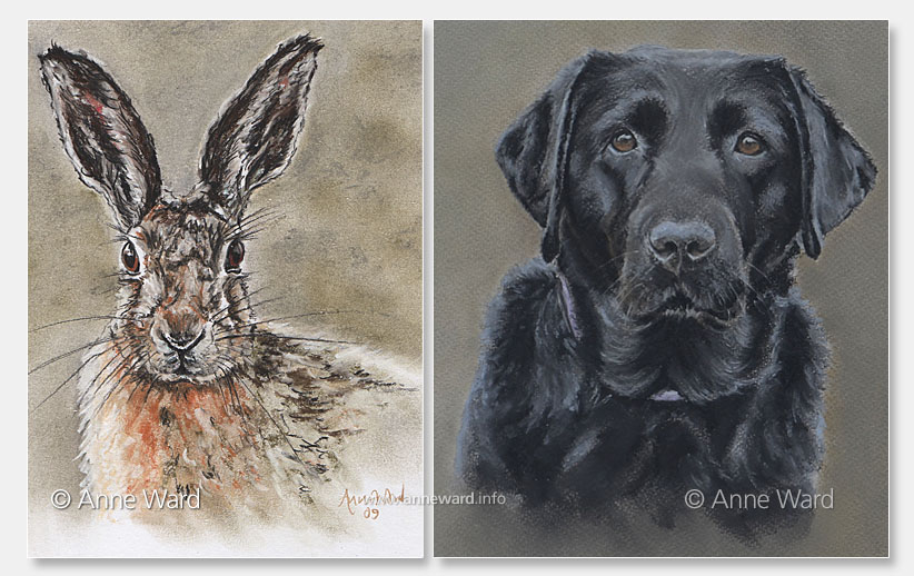 Anne Ward artist hare and black Labrador portraits