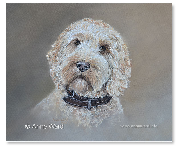 Anne Ward artist Cockerpoo dog portrait