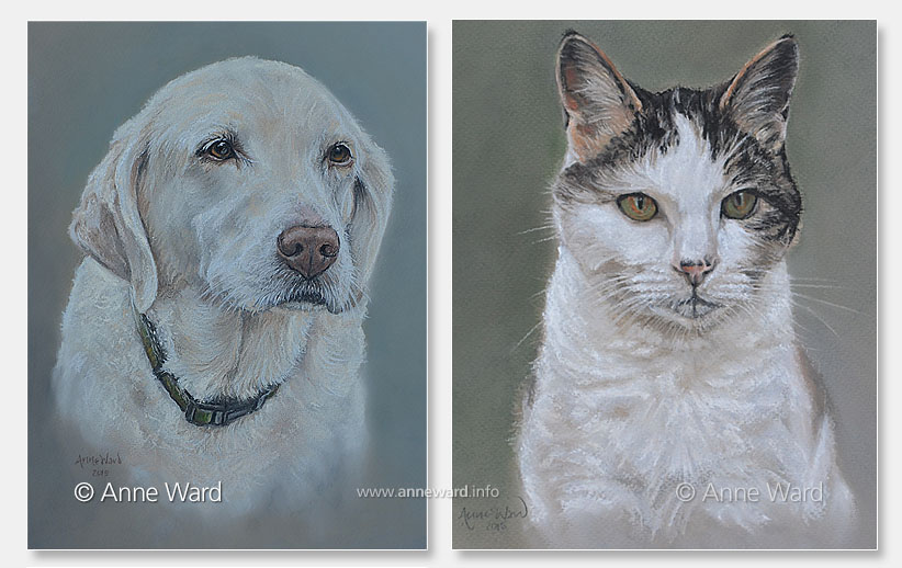 Anne Ward artist yellow Labrador and cat portraits